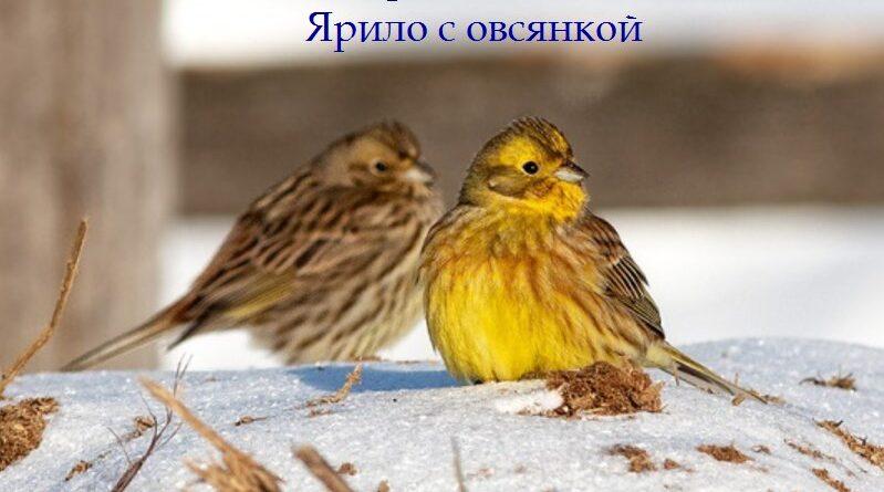 народные приметы, календарь, 3 марта, поверья, народный календарь, приметы