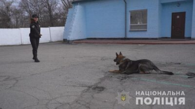 службові собаки_поліція
