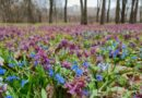 ботанический сад_Днепр