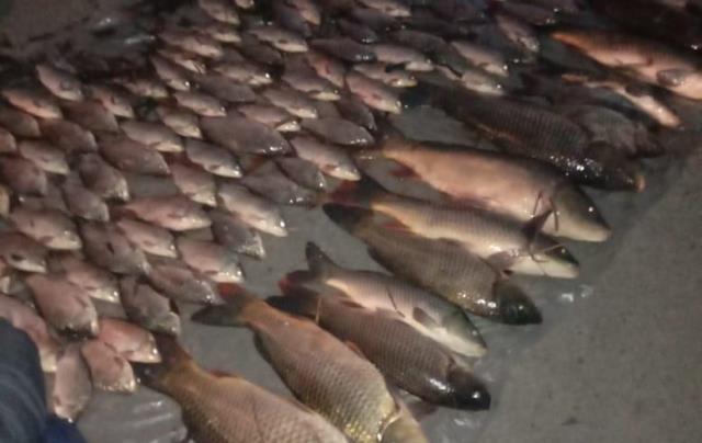 браконьєри_риба