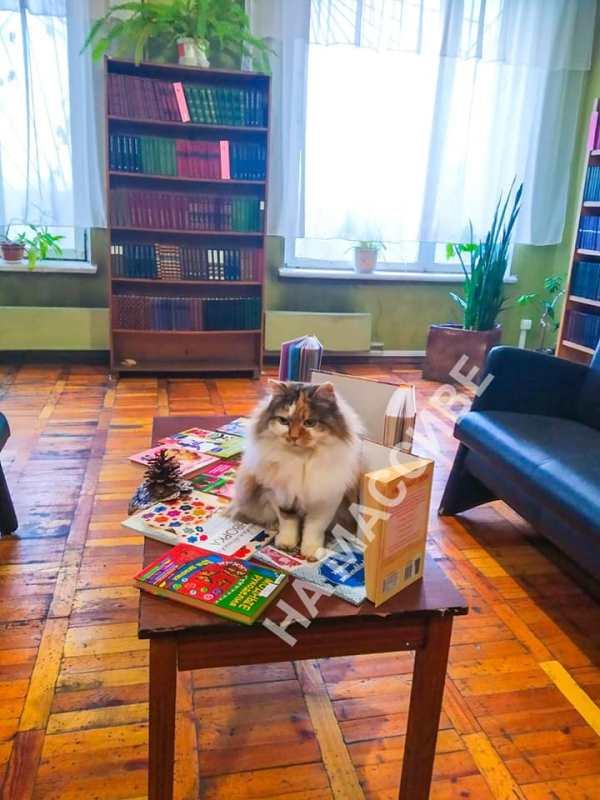 кошка Муся_Днепр