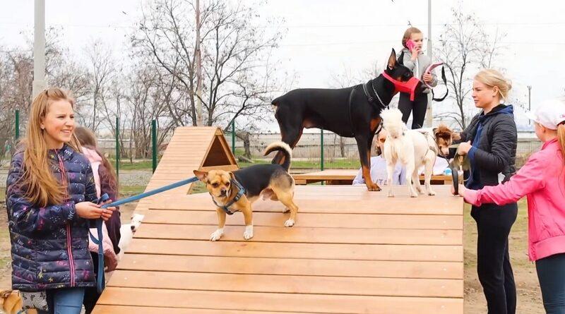 площадка для собак_Днепр