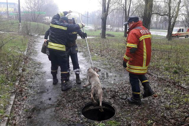спасение собаки_колодец