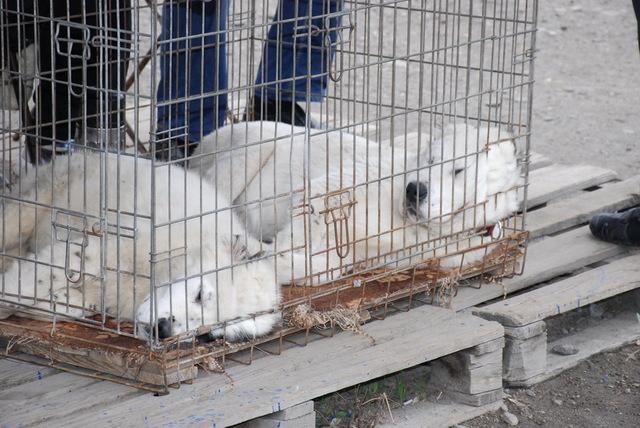 торговля животными_Днепр