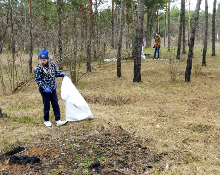 уборка леса_Покров
