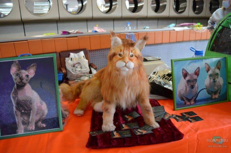 выставка кошек_Днепр