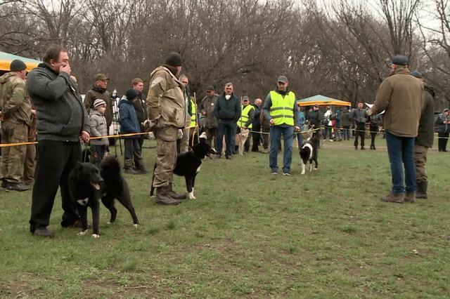 выставка охотничьих собак_Днепр