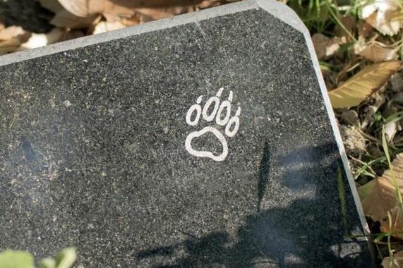 кладбище домашних животных_Днепр