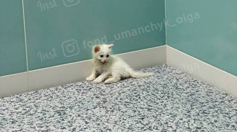 котенок Маринет