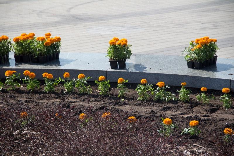 квіти_Дніпро