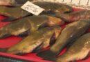 продаж риби_Дніпро