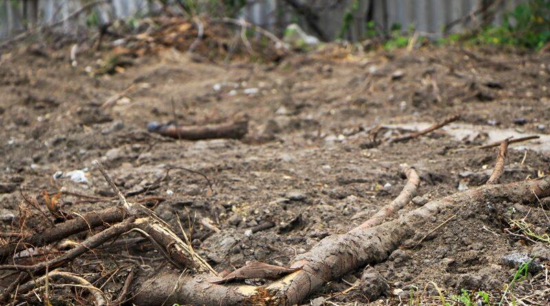 у Дніпрі спиляли дерева