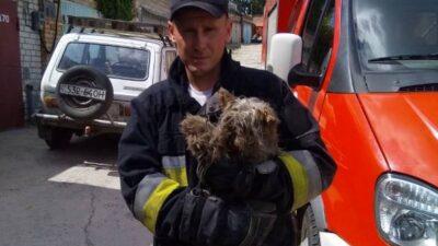 чрезвычайники спасли собаку_Днепр