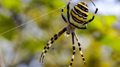 В Днепропетровской области активизировались ядовитые пауки