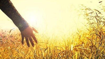 Народные приметы на 13 июня – Еремей-распрягальник, Еремей-бобовник