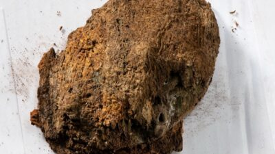 Археологи нашли редкую шерстяную ткань викингов (фото)