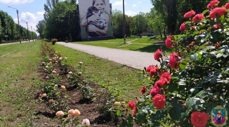 трояндова алея_Покров