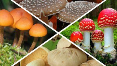Топ-10 ядовитых грибов: виды, описание и фото