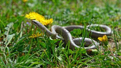 Народные приметы на 12 июня – Исаакий-змеевик, Исакиев день, Змеиный праздник