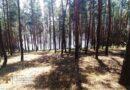 ліс_Царичанський район
