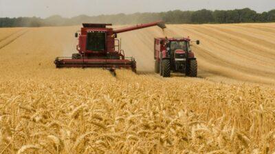 пшеница_поле
