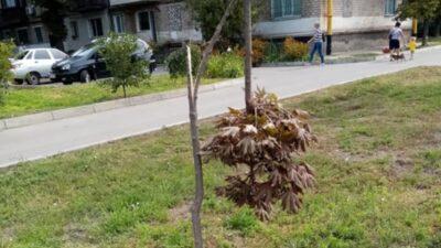 Покров_дерева