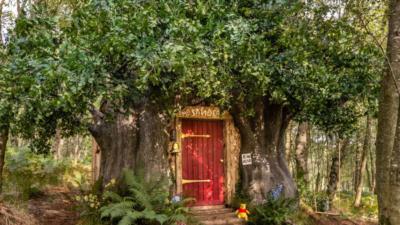 В английском лесу сдается в аренду домик Винни-Пуха