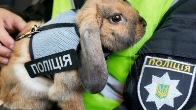 кролик-полицейский_Днепр