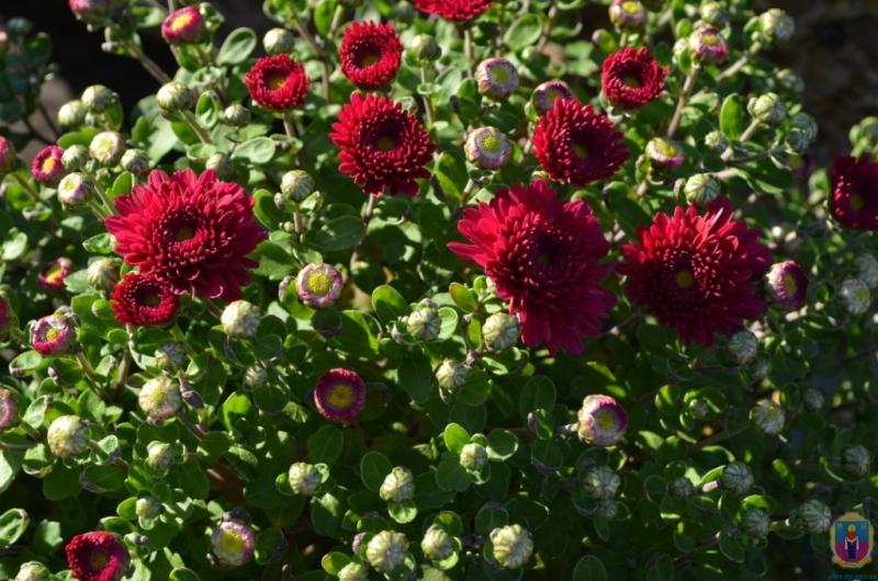 квіти_Покров