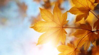 День осеннего равноденствия 22 сентября: что нельзя делать