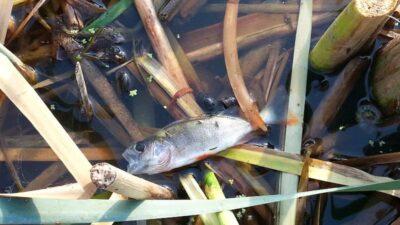 замор риби