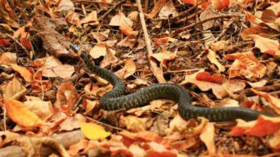 Народные приметы на 25 сентября – Артамон (Автоном), Змеиный день