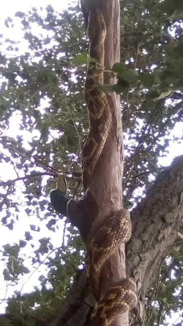 лесопарк Днепр_змея из дерева