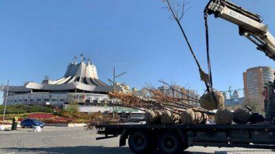 На реконструированной парковке в центре Днепра высадили деревья (фото)